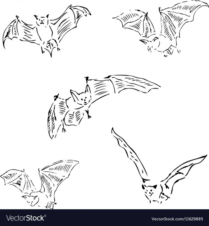 Amazing Bat Pencil Drawing Ideas Bats In Different Positions Pencil Sketch By Hand Photos
