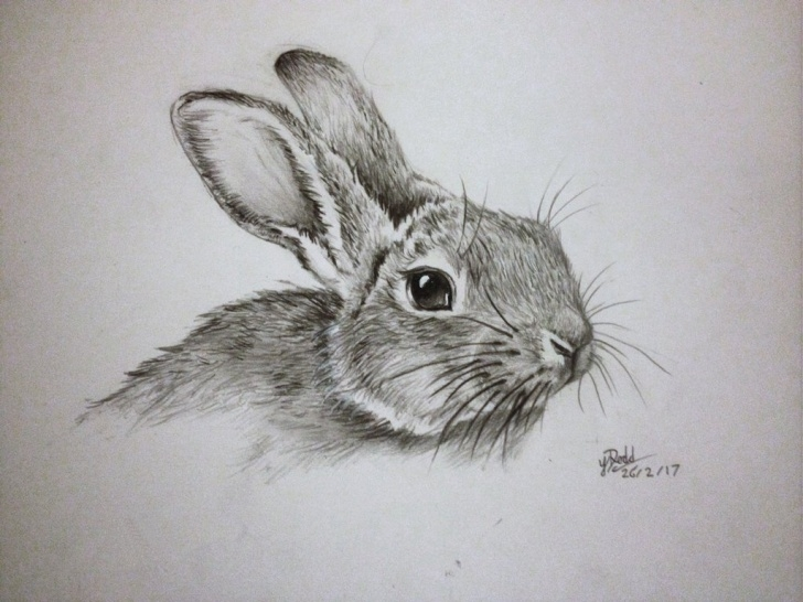 Amazing Bunny Pencil Drawing Lessons Rabbit Sketch In Pencil At Paintingvalley | Explore Collection Image