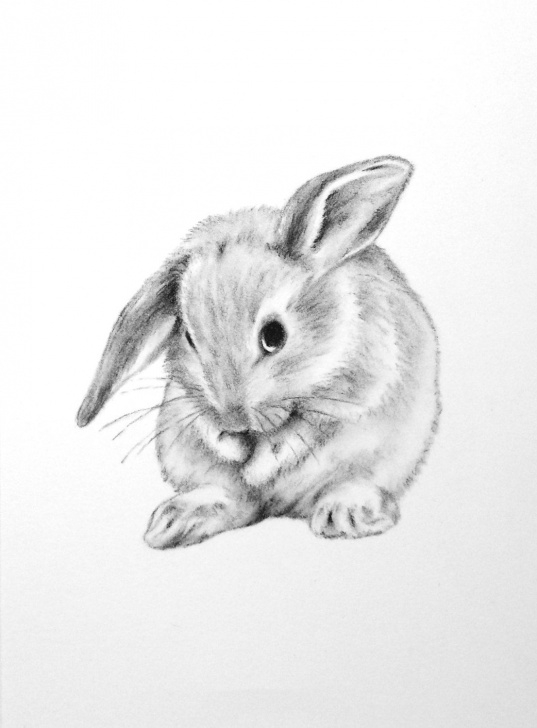 Amazing Bunny Pencil Drawing Lessons Rabbit To Draw. | Bunny Stuff | Bunny Drawing, Rabbit Drawing Picture