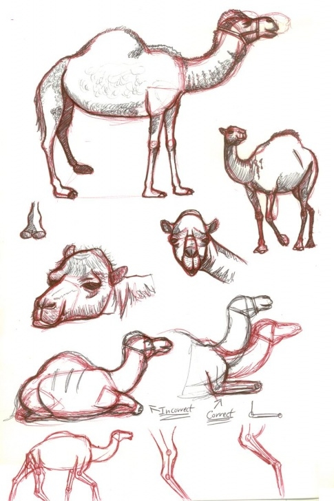 Amazing Camel Pencil Drawing Easy Artists Drawings Of Camels | Camel Sketches By Astrocity20 On Picture