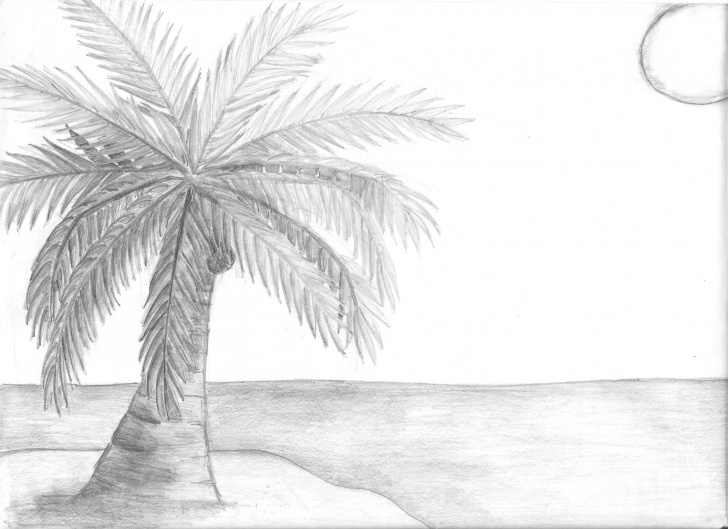 Amazing Coconut Tree Pencil Drawing Easy Palm Tree Pencil Sketch And Sketch Of A Coconut Tree Coconut Tree Photo