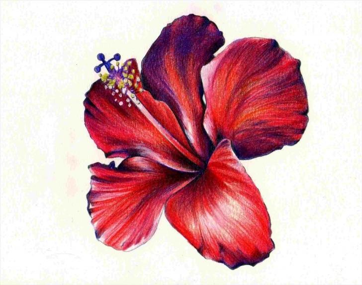 Amazing Colour Pencil Sketches Flowers Simple Flower Colour Pencil Drawing At Paintingvalley | Explore Image