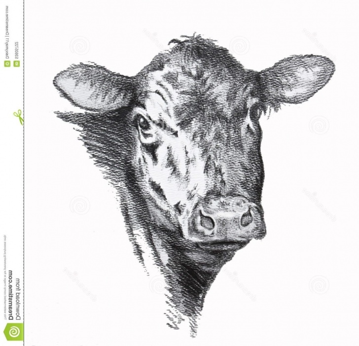Amazing Cow Pencil Drawing Tutorial Cow Pencil Drawing At Paintingvalley | Explore Collection Of Cow Image