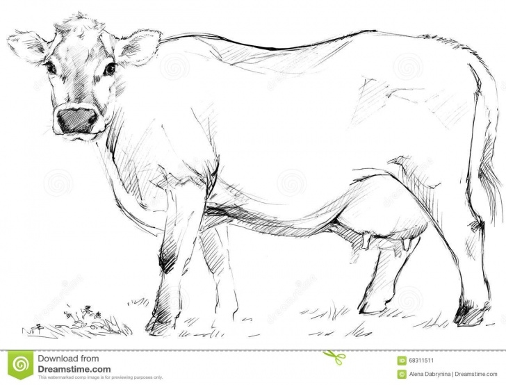 Amazing Cow Pencil Sketch Easy Sketch Of Cow Drawings And Cow Sketch. Dairy Cow Pencil Sketch Picture