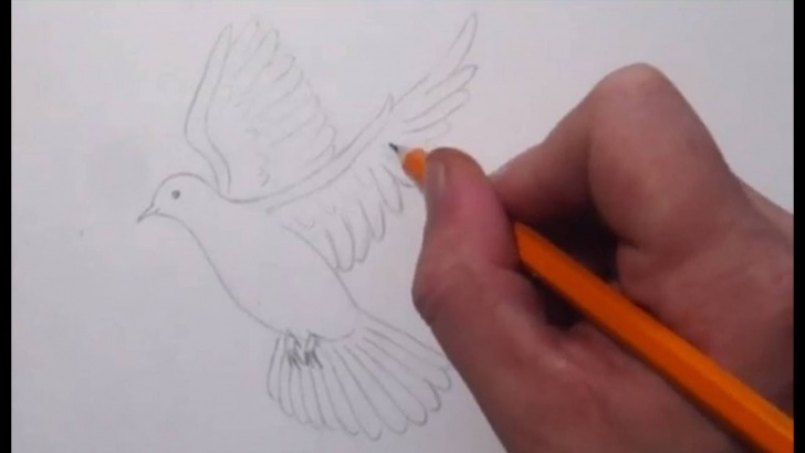 Amazing Dove Drawings Pencil for Beginners How To Draw A Dove Picture