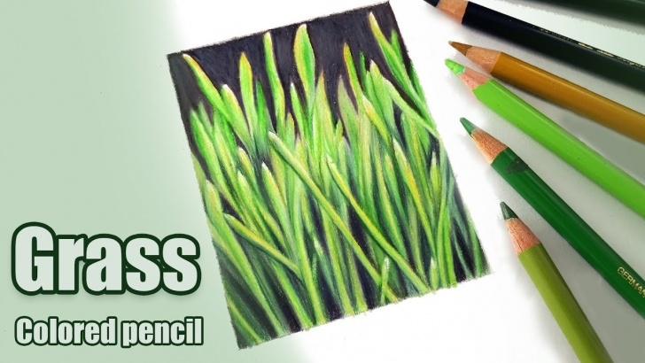 Amazing Drawing Grass With Colored Pencil Simple How To Draw Grass In Colored Pencil Picture