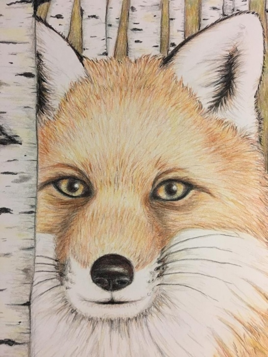 Amazing Fox Pencil Drawing Tutorials Fox In The Woods Original 8X10 Colored Pencil Drawing Pics