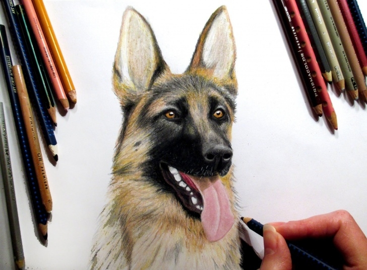 Amazing German Shepherd Drawings In Pencil Tutorial German Shepherd In Colored Pencil ▻ Time-Lapse | Jasmina Susak How Photo