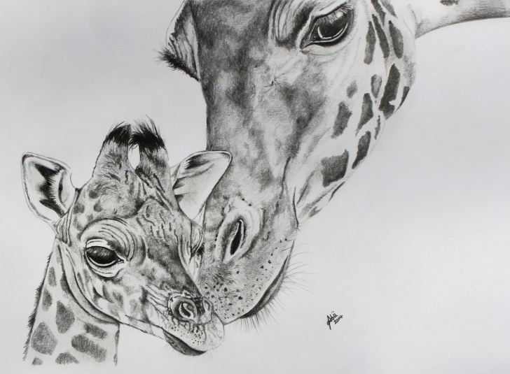 Amazing Giraffe Pencil Sketch Ideas Drawing Giraffes | Giraffe Face Drawing Giraffe Pencil Drawing Image