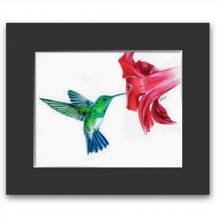 Amazing Hummingbird Drawings In Pencil Ideas Colored Pencil Hummingbird Drawing Image