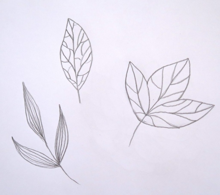 Amazing Leaf Drawings In Pencil Step by Step How To Turn A Sketch Into A Vector In Adobe Illustrator. How To Draw Pic