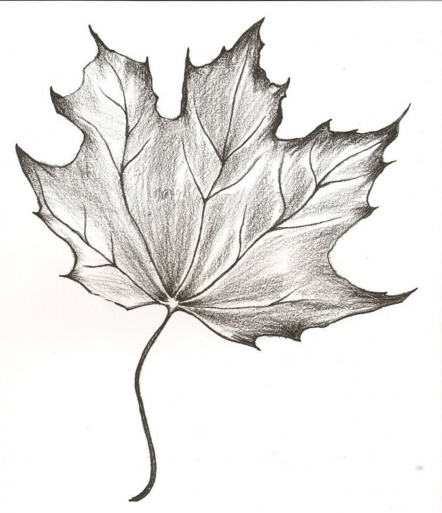 Amazing Leaf Pencil Sketch Techniques for Beginners Sketches Of Maple Leaves | Maple Leaf Drawing By Piemuncher22 On Photo