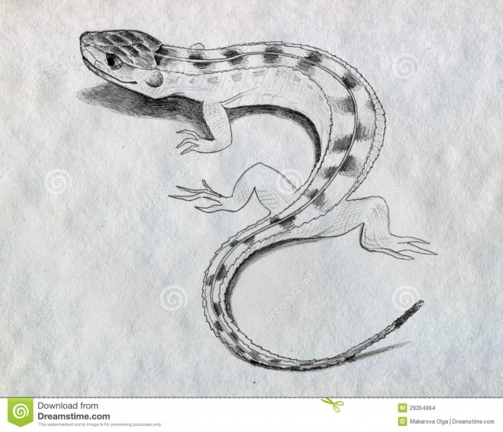 Amazing Lizard Pencil Drawing Simple Lizard Sketch Stock Illustration. Illustration Of Crawling - 29354964 Pics
