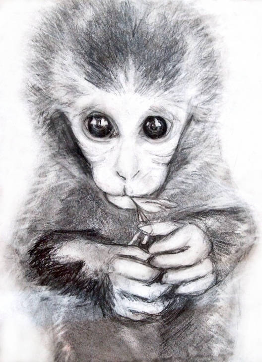 Amazing Monkey Pencil Drawing for Beginners Free Monkey Drawings, Download Free Clip Art, Free Clip Art On Image