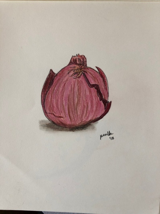 Amazing Onion Pencil Drawing for Beginners Red Onion Pencil On Paper Drawing Picture