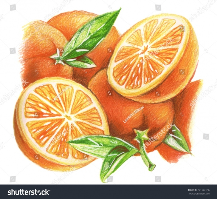 Amazing Orange Pencil Drawing Easy Orange Fruit Pencil Sketch And Pencil Drawing Oranges Stock Images