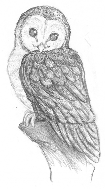 Amazing Owl Pencil Drawing Ideas Owl Pencil Sketch At Paintingvalley | Explore Collection Of Owl Images