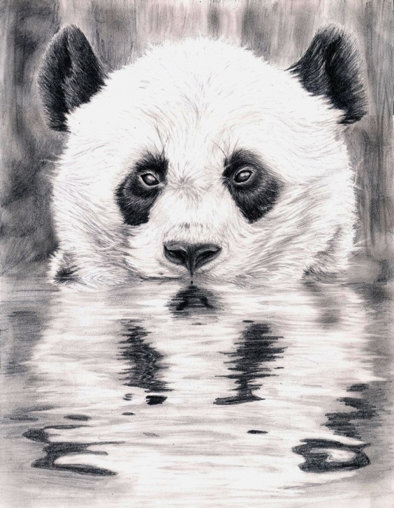 Amazing Panda Drawing Realistic Simple Reflection - A Panda Sketch | Animal/character Art | Panda Drawing Image