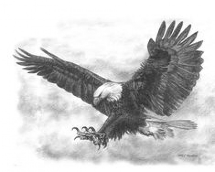 Amazing Pencil Drawings Of Eagles In Flight Free 221 Best Eagle Sketches Images In 2018 | Eagle Drawing, Eagle Pic