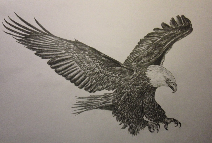 Amazing Pencil Drawings Of Eagles In Flight Tutorials Flying Eagle Pencil Drawing At Paintingvalley | Explore Pics