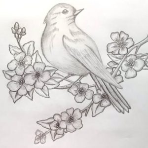 Amazing Pencil Sketch Step By Step Tutorial How To Draw A Bird With Pencil Sketch.step By Step(Easy Draw) Picture