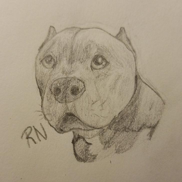Amazing Pitbull Drawings In Pencil Tutorials Pencil Drawing Pitbull | Tumblr Image