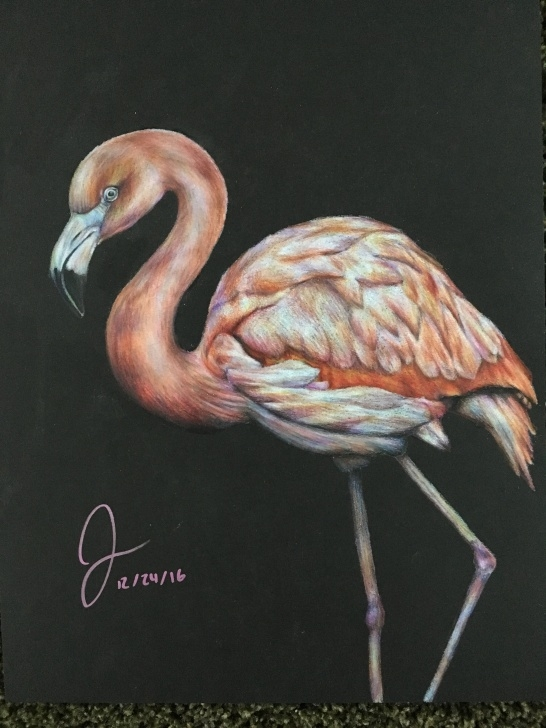 Amazing Prismacolor On Black Paper Step by Step Flamingo, 9X12 Inches, Prismacolor Pencils On Black Paper - Album On Pic
