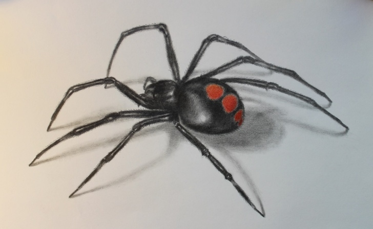 Amazing Spider Pencil Drawing Free Spider Pencil Drawing At Paintingvalley | Explore Collection Of Photo