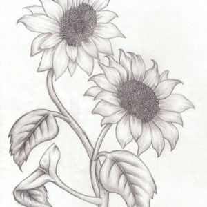 Amazing Sunflower Pencil Drawing for Beginners How To Draw Sunflowers - Google Search | Drawings Of Flowers In 2019 Images