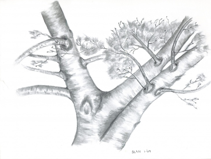 Amazing Tree Pencil Art for Beginners Stan Dzoga, Apple Tree Image