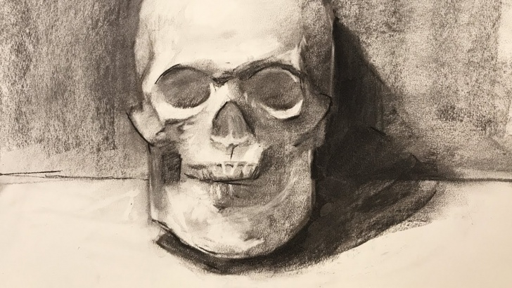 Amazing Vine Charcoal Drawing Step by Step Still Life #91 - Drawing A Skull Plaster Cast Using Vine Charcoal Photo