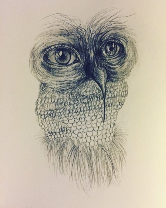 "Amazing Weird Pencil Drawings Ideas Eleanor Crane On Twitter: ""strange Species Indigenous To Attics And Picture"