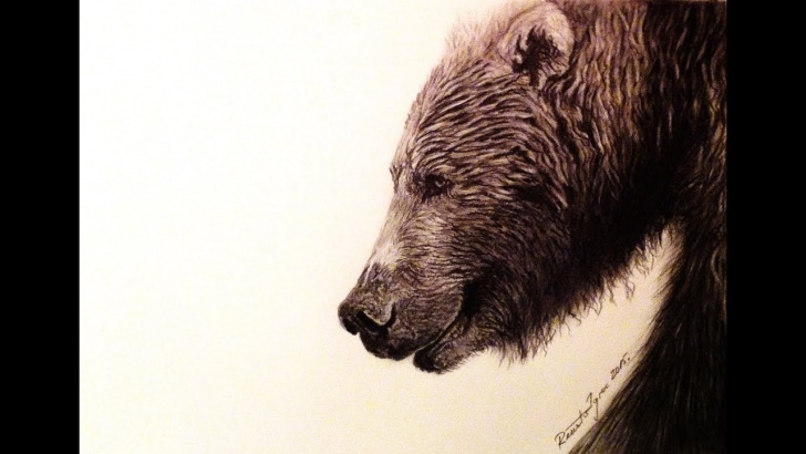 Awesome Bear Pencil Drawing Simple The Grizzly Bear - Pencil Drawing Photos