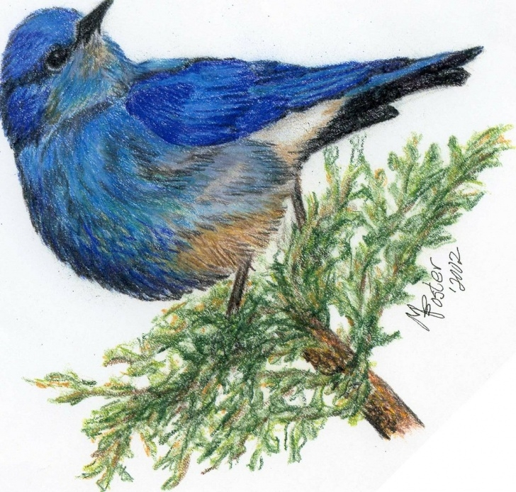 Awesome Bird Colored Pencil Ideas Colored Pencil Drawing Of A Blue Bird | My Scanner Insisted … | Flickr Picture