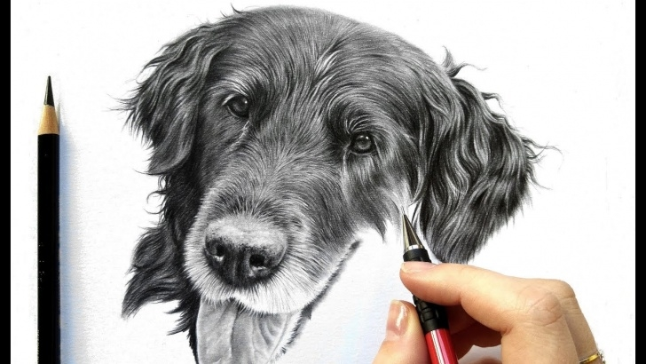 Awesome Black Pencil Drawing Lessons Drawing Tutorial: How To Draw Realistic Black Fur - Graphite And Colored  Pencil | Leontine Van Vliet Images