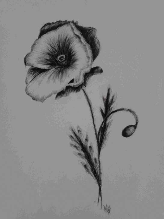 Awesome Charcoal Flower Drawings Ideas Charcoal Drawing Flower Drawings And Realistic Color Pencil Photo