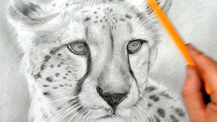 Awesome Cheetah Pencil Drawing Step by Step How To Draw A Cheetah - Realistic Pencil Drawing Picture