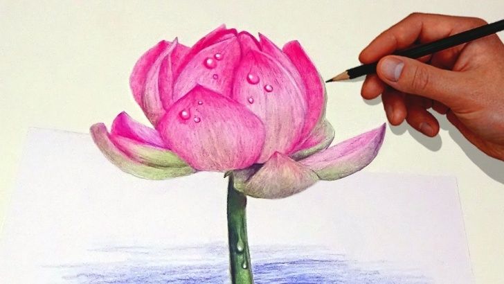 Awesome Colored Pencil Flower Drawings Techniques Drawing A Lotus Flower With Simple Colored Pencils | - Youtube Pictures
