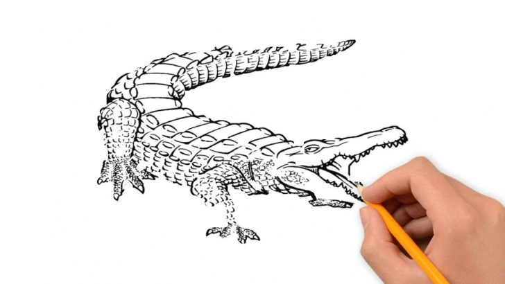 Awesome Crocodile Pencil Drawing Techniques for Beginners Crocodile Pencil Sketch And Crocodile Animals Pencil To Draw Pics