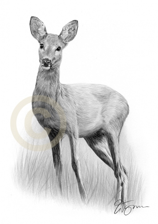 Awesome Deer Pencil Drawings Ideas Pencil Drawings Of Deer - Soner.toeriverstorytelling Image