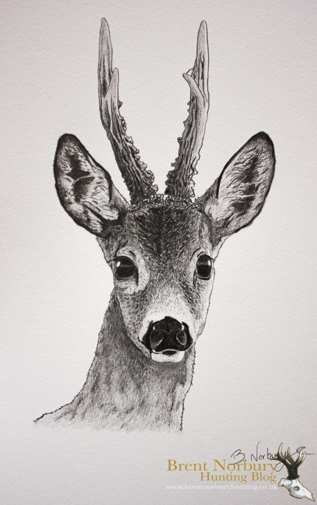 Awesome Deer Pencil Sketch Simple Deer Face Sketch At Paintingvalley | Explore Collection Of Deer Photos