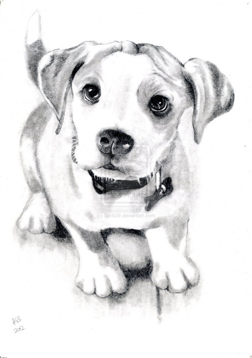 Awesome Dog Pencil Art Tutorials Dog Sketch By Spritz3R.deviantart On @deviantart | Dog Portraits Photo