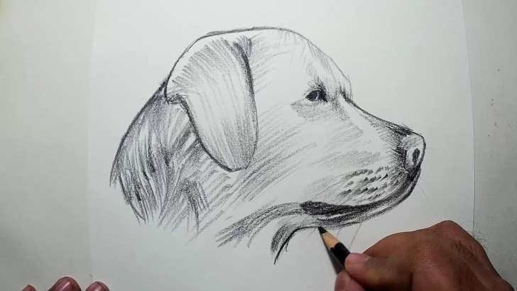 Awesome Dog Pencil Sketch Free How To Draw A Dog Head || Easy Pencil Drawing Image