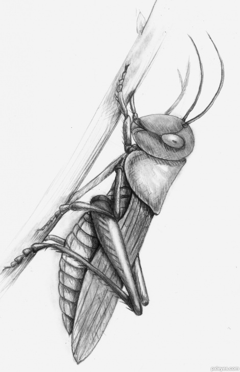 Awesome Drawing Insects Pencil Tutorial Get Ready Picture, By Sophia For: Realistic Insects Drawing Contest Picture