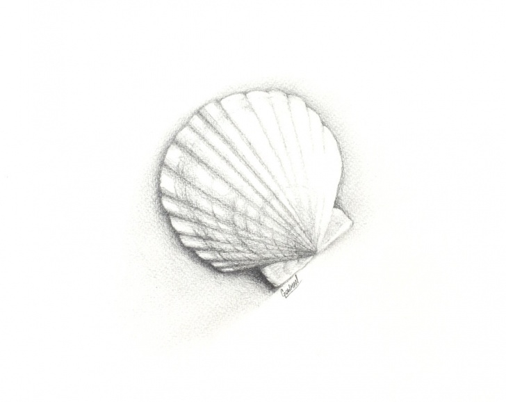 Awesome Drawings Of Shells In Pencil Step by Step Scallop Shell Drawing - Pencil - Album On Imgur Picture