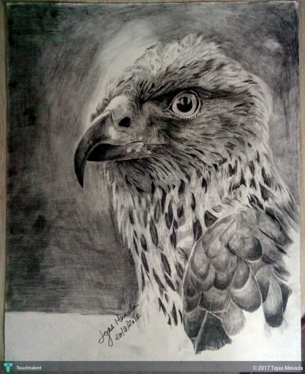 Awesome Eagle Pencil Sketch Free Eagle Pencil Sketch | Touchtalent - For Everything Creative Pictures
