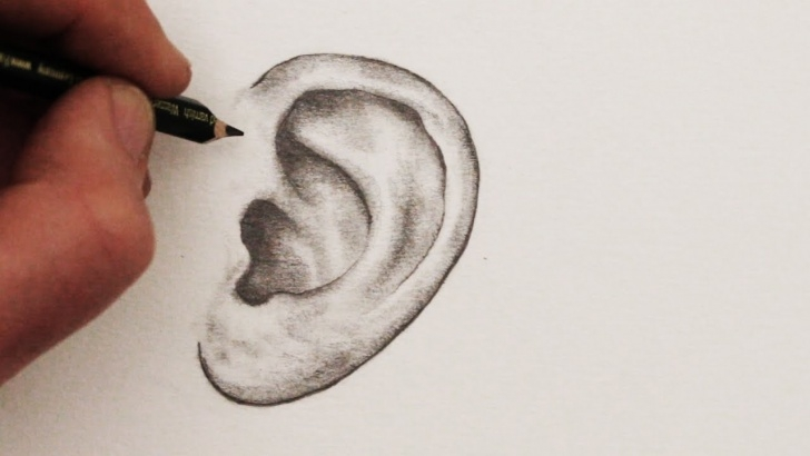 Awesome Ear Pencil Drawing Tutorials How To Draw Ears: Step By Step Pic
