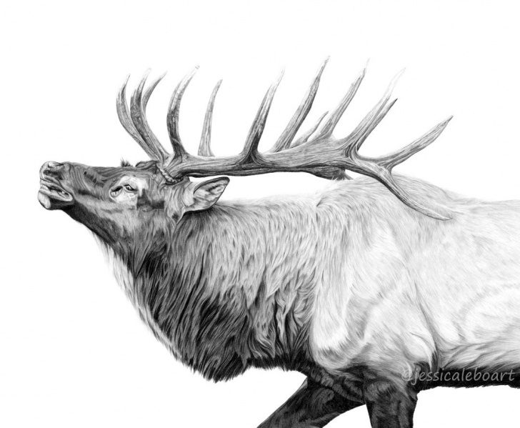 Awesome Elk Pencil Drawings Simple Graphite Drawings | Graphite Pencil Drawings | Graphite Drawings Pics