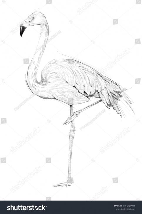 Awesome Flamingo Pencil Drawing Techniques Flamingo Bird Sketch Pencil Sketch Stock Illustration 1165760041 Photo