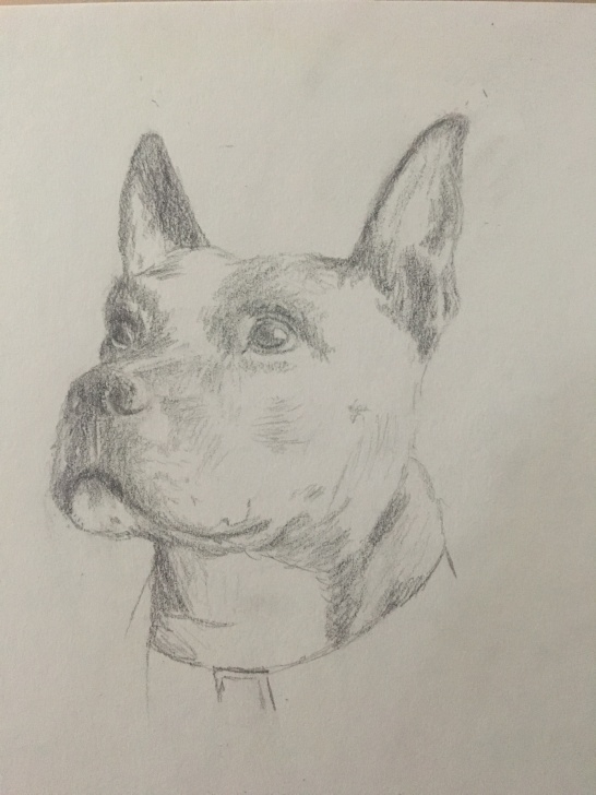 Awesome Good Pencil Drawings Tutorial Good Pup Pencil Drawing - Album On Imgur Pics